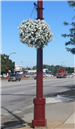 Plant Hangs on Lamp Post